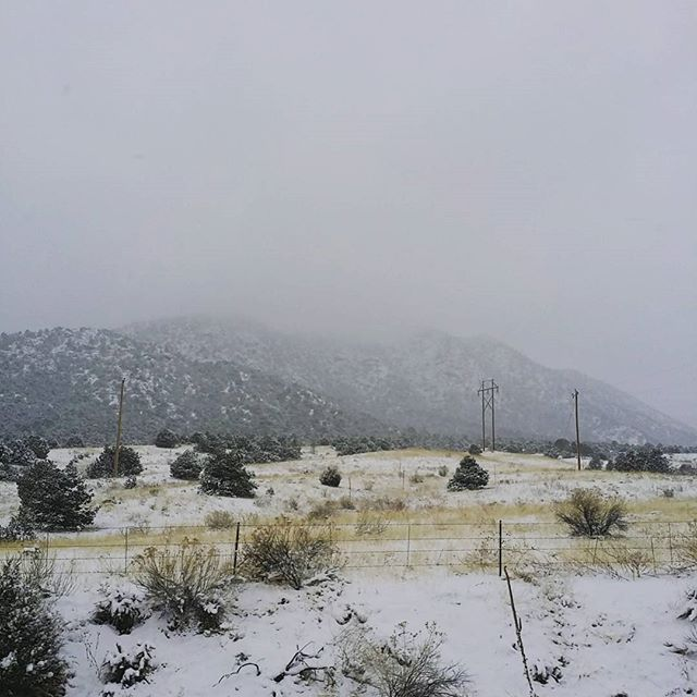 White capped evergreens and snow lightly falling on the grass lands. Highway 9 from Canon City to Breckenridge. snowfalling evergreentrees hwy9 breckenridge Canoncity