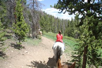 The horses had no problem navigating the trails