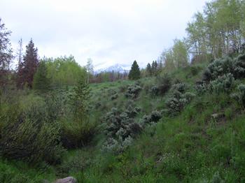 Quandary Peak as seen from Salt Lick Trail