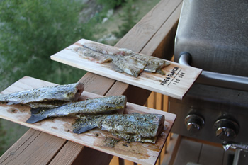 Rainbow Trout Fishing in Silverthorne, Colorado